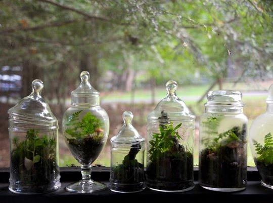 Μετατρέψτε τις γυάλες σε μικρούς πράσινους παραδείσους. Φυτέψτε φυτά και φροντίστε τα για να διακοσμούν πάντα με τον πιο φυσικό και ζωηρό τρόπο την αγαπημένη σας γωνιά