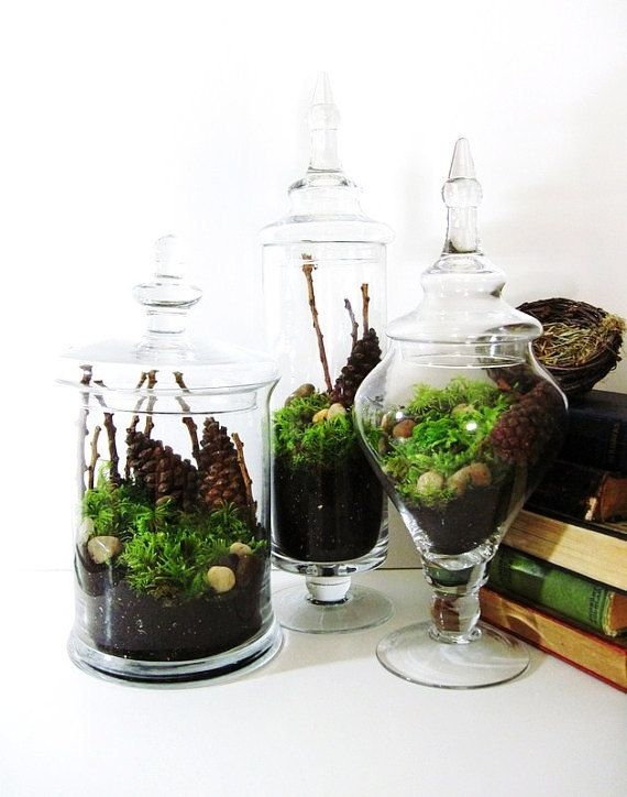 Μετατρέψτε τα γυάλινα βάζα σε μικρούς πράσινους παραδείσους
